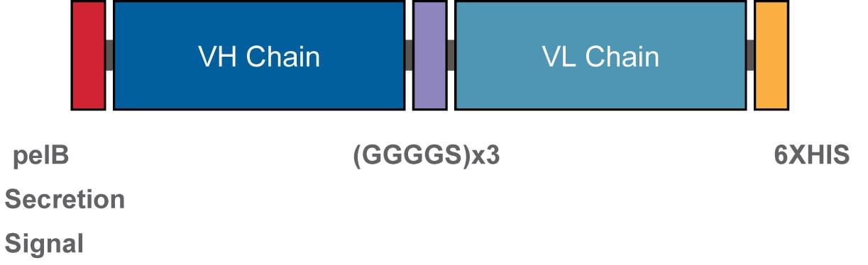 Figure 2 ScFvs Are Expressed In E Coli And Binding Of The Purified To Target Antigen Is Verified By ELISA
